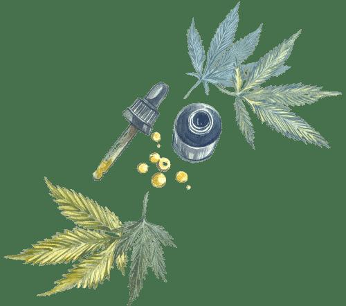 huiles cbd au cannabis